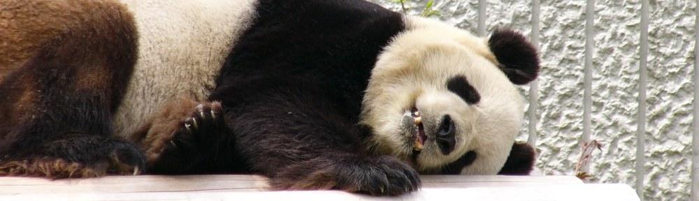 PandaLove.net